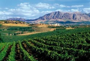 Weinlandschaft nahe Palermo