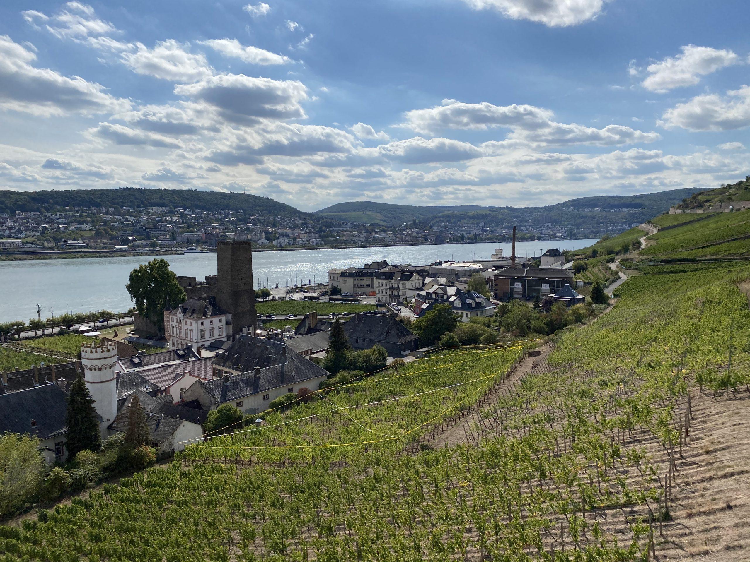 Priorat zu Gast im Rheingau - Collegium Vini Blick auf Brömserburg und Rüdesheimer Schloss