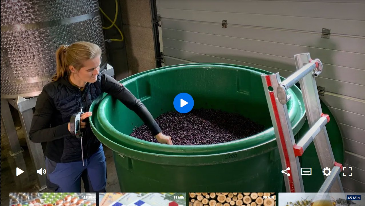 You are currently viewing Wie man Rotwein macht